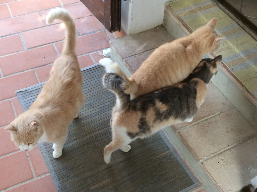 "cats waiting for ""la gattara."""